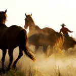 The Cowboy Mystique (Pt. 3): A Cowboy Isn't a Cowboy Without His Horse