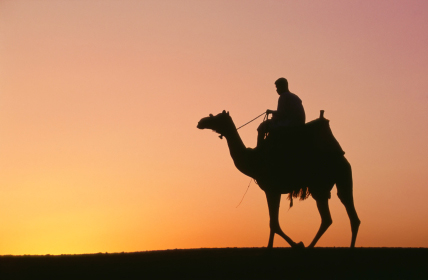 camel_sunset
