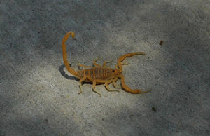 Weather stripping and caulking and can prevent scorpions from entering your home. iStock