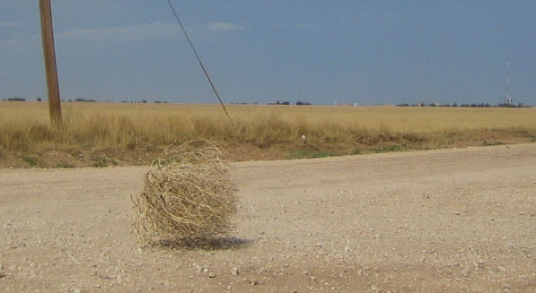 Tumbleweed_rolling_2.jpg