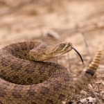 What's Lurking Around the Valley? Snakes, Gila Monsters and More