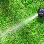 Tips for Growing a Winter Lawn in the Valley