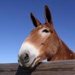Joe Felmer's Mule Scheme Goes Awry