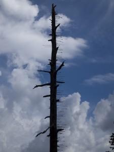 Arrow Tree