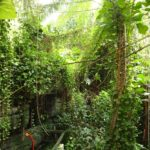 Biosphere 2 Brings a Rainforest to the Arizona Desert