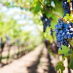 Get Your Arizona Wine Fix at Cornville Wineries
