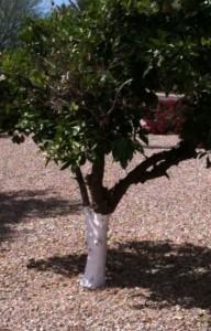 White Tree Trunk